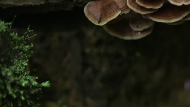panning shot to fungus growing on a fallen tree in the el triunfo biosphere reserve. - log stock videos & royalty-free footage