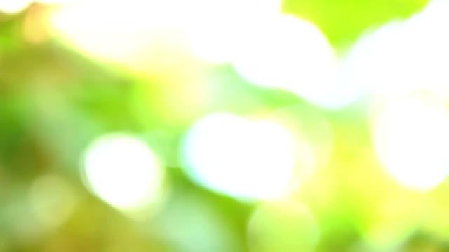 vídeos de stock e filmes b-roll de panning shot:white grapes in vineyard - ramo parte de uma planta