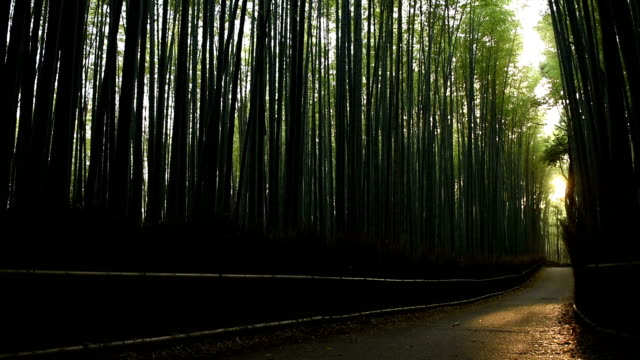 Panning through a bamboo forest