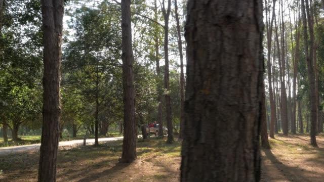 森の中のパン - ハシボソキツツキ点の映像素材/bロール