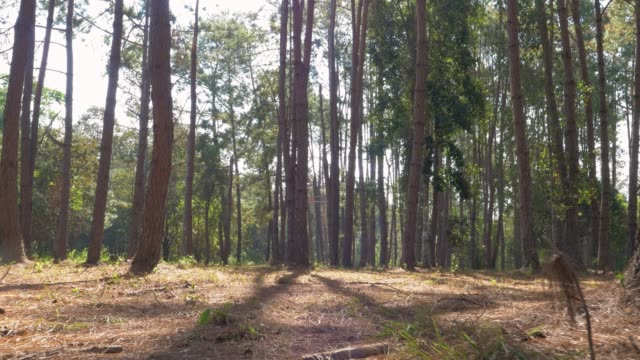 panning through a forest - flicker bird stock videos & royalty-free footage
