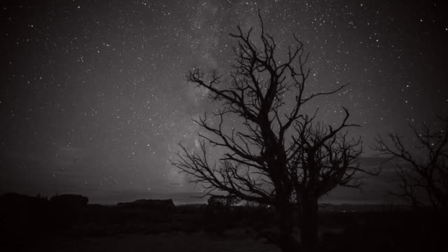 vídeos y material grabado en eventos de stock de panning time lapse shot of bare tree against stars in sky at night - arches national park, utah - bare tree