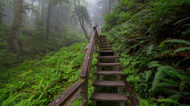 panning time lapse shot of wooden steps amidst green plants in forest - tofino, canada - panning stock videos & royalty-free footage