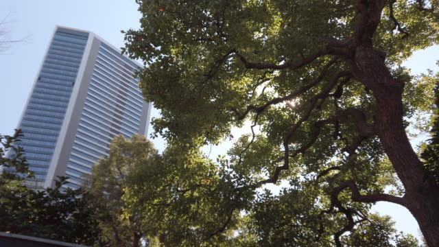 4k panning . tokyo cityscape office and tree with clear sky - high section stock videos & royalty-free footage