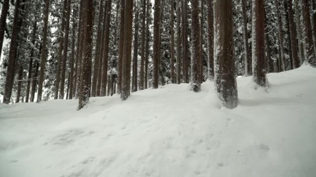 パン: あまり雪の形になるまで形密度松林山白川郷村で歩きながら - パン点の映像素材/bロール