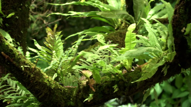 panning: tree ferns is on tree branch - named wilderness area stock videos & royalty-free footage