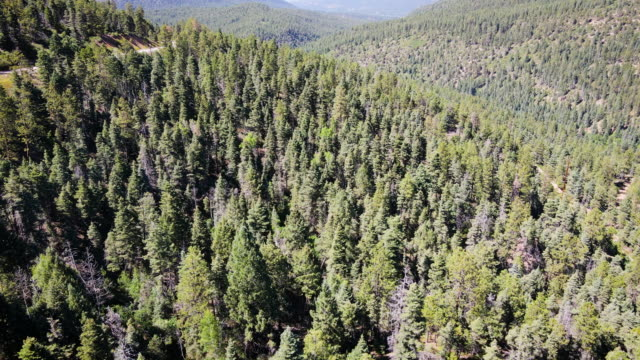 panning up over endless trees in wide valley of thick pine forest - new mexico stock videos & royalty-free footage