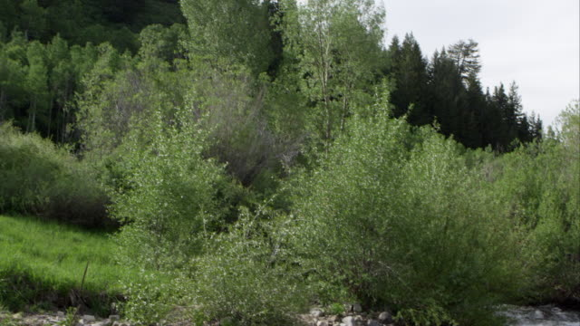 panning view down a tree line to a river flowing. - american fork city stock videos & royalty-free footage