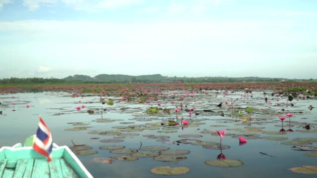 blick vom leiter der boot ansicht, um rosa lotus in feuchtgebieten thale noi schwenken - lagune stock-videos und b-roll-filmmaterial