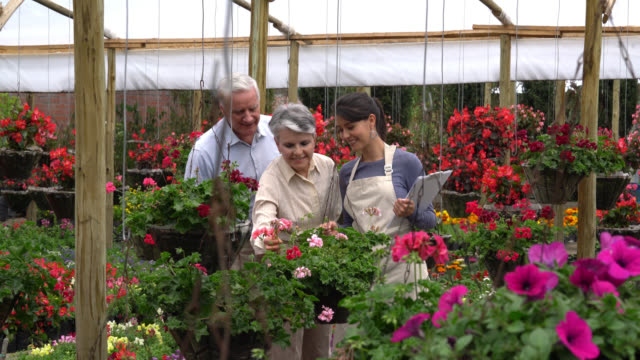 panning view of couple choosing plants and employee helping them - garden center stock videos and b-roll footage