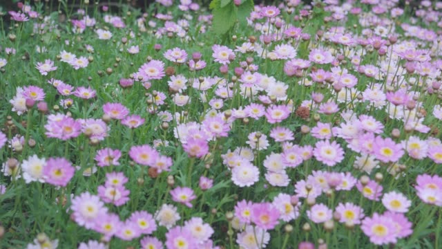 panning view of summer flower in garden,Northern Ireland