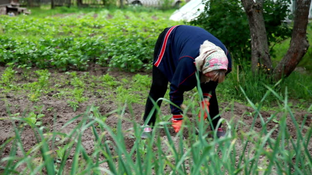 panning view of woman weeding the plants with a hoe - garden hoe stock videos & royalty-free footage