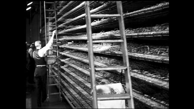 vídeos de stock e filmes b-roll de panning view of woman working on piles of paperwork and writing; man with ladder working on shelves full of wires - 1940 1949