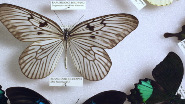 panning view over  butterfly collection display - collection stock videos and b-roll footage