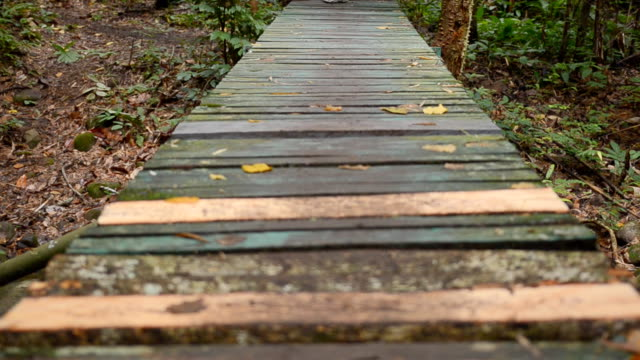 panning : walking wooden way in forest