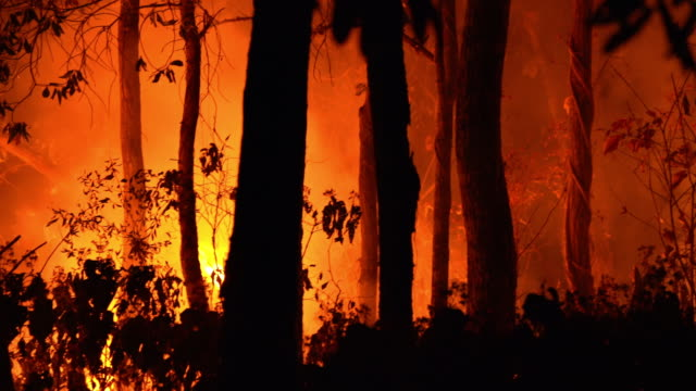 panning cu wildfire forest fire at night in the - heat stock videos & royalty-free footage