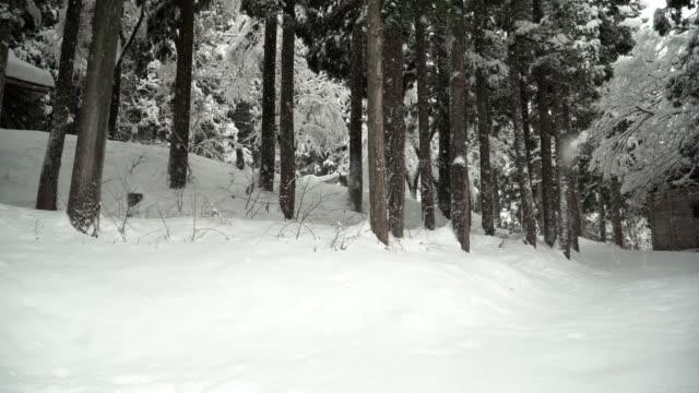 パン: 雪下白川郷村で松林の中で木造住宅 - パン点の映像素材/bロール
