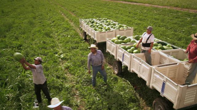 vídeos y material grabado en eventos de stock de panning,aerial shot of workers in a field. - tierra cultivada