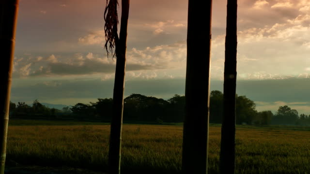 stockvideo's en b-roll-footage met hd wassen: zonsondergang op grainfield - cross processen