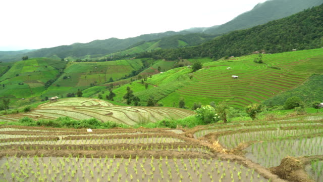 panning:wide angle view of delighted rice terrace with freshness water