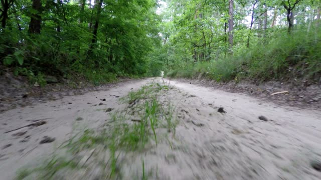 panorama along the forest road. - dirt road stock videos and b-roll footage