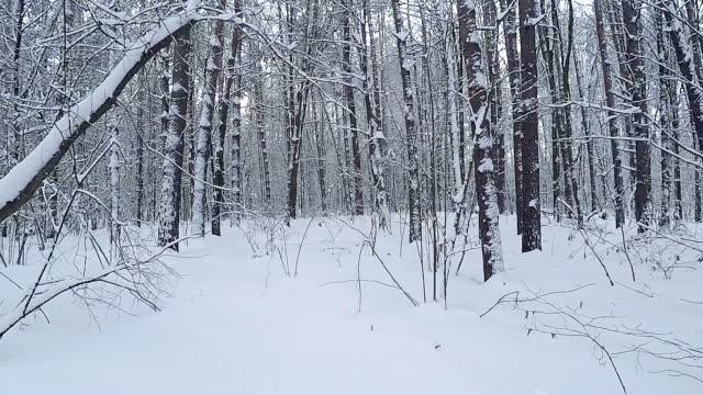 雪が降った後の冬の森のパノラマ。 - 国有林点の映像素材/bロール