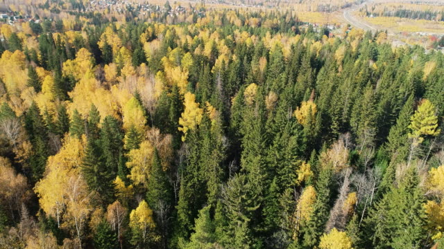 panoramic view from the height of the autumn forest. - russland stock-videos und b-roll-filmmaterial