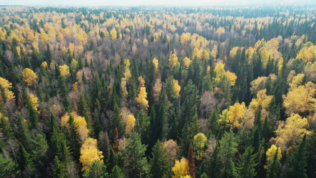 vídeos de stock e filmes b-roll de panoramic view from the height of the autumn forest. - rússia