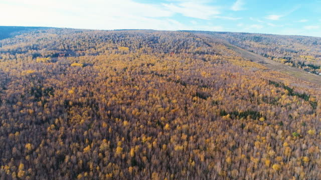 vidéos et rushes de panoramic view from the height of the autumn forest. - fédération de russie