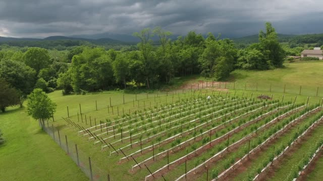 stockvideo's en b-roll-footage met panoramic view of a vineyard on the foothills of appalachia that looks just like toscana and many other parts around the globe. just pure enchantment... - virginia amerikaanse staat