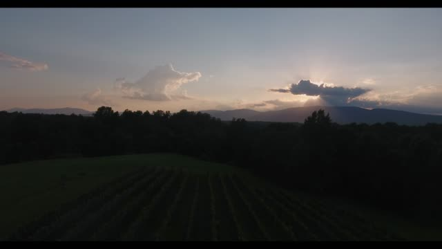 panoramic view of a vineyard on the foothills of appalachia that looks just like toscana and many other parts around the globe. just pure enchantment... - georgia bildbanksvideor och videomaterial från bakom kulisserna