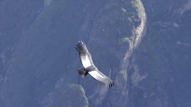 vídeos de stock e filmes b-roll de panoramic view of landscape colca canyon, peru. - majestoso
