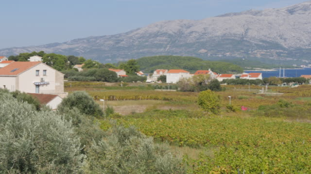 Panoramic view of Lumbarda and vineyards, Korcula Island, Dalmatia, Croatia, Europe