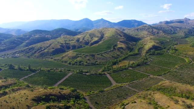 航空写真: 緑山のブドウ園が付いている谷のパノラマ ビュー - クワッドコプター点の映像素材/bロール
