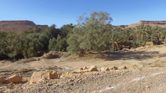 panoramic view of ziz valley (valee de ziz) - desert oasis - pjphoto69 stock videos & royalty-free footage