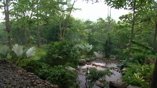 panright over a densely forested landscape under a downpour of rain - tropical tree stock videos & royalty-free footage