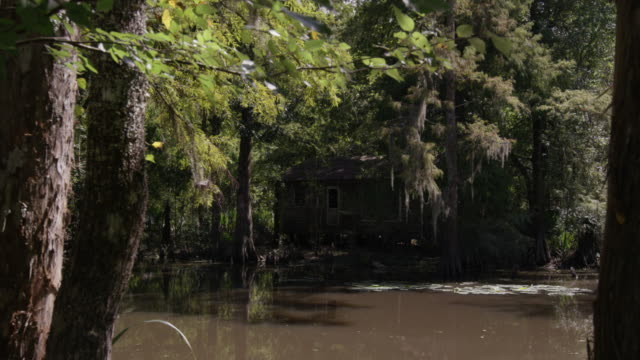 pan-right shot of an abandoned house in the middle of the flooded forest - shack stock videos & royalty-free footage