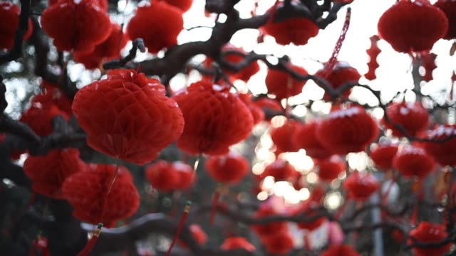 paper lanterns hang from a tree in a beijing park in preparation for chinese new year beijing prepares for chinese new year on february 08 2013 in... - chinesisches laternenfest stock-videos und b-roll-filmmaterial