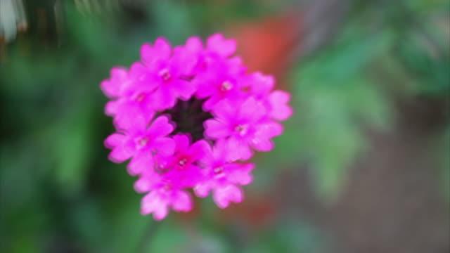 Yellow Schmetterling Fütterung auf Blumen HD