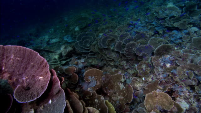 vídeos y material grabado en eventos de stock de ms, papua new guinea, fishes swimming over corals - grupo mediano de animales