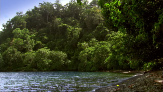 ms, papua new guinea, milne bay province, shoreline - papua stock videos and b-roll footage