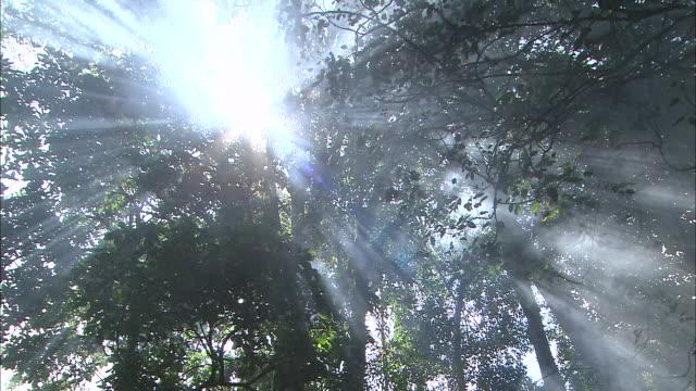 vídeos y material grabado en eventos de stock de papua new guinea; mt. wilhelm - rayo de sol