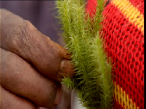 papuan villager places moss into headdress in preparation for mount hagen show, papua new guinea - headdress stock videos & royalty-free footage