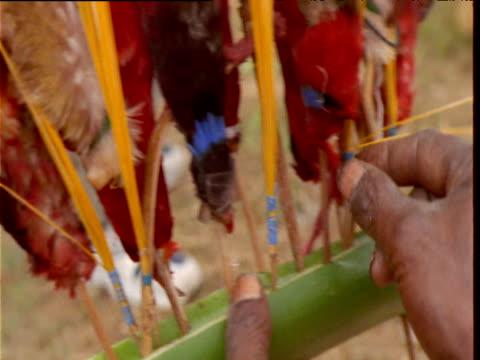 vidéos et rushes de papuan villager prepares headdress with bird skins at mount hagen show, papua new guinea - coiffe traditionnelle