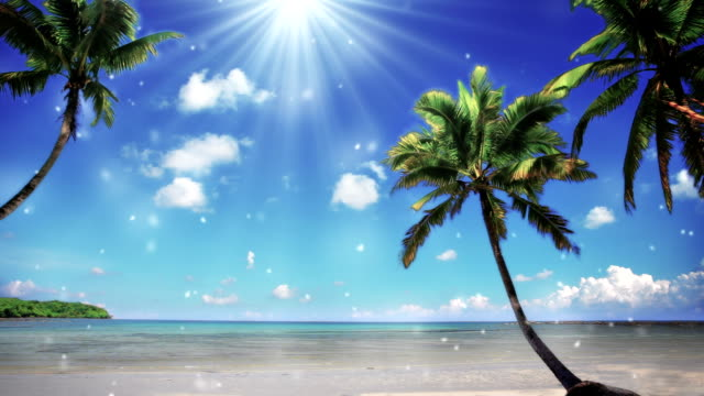 paradise beach - tropical tree stock videos and b-roll footage