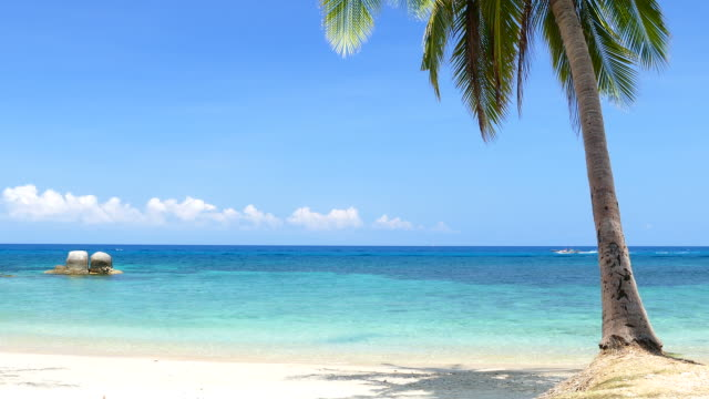 stockvideo's en b-roll-footage met paradise beach with blue turquoise sea and coconut palm tree - zeegezicht