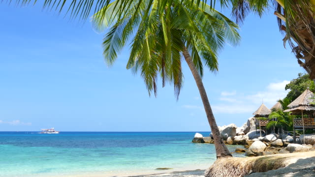 Paradise Beach with Blue Turquoise Sea and Coconut Palm Tree