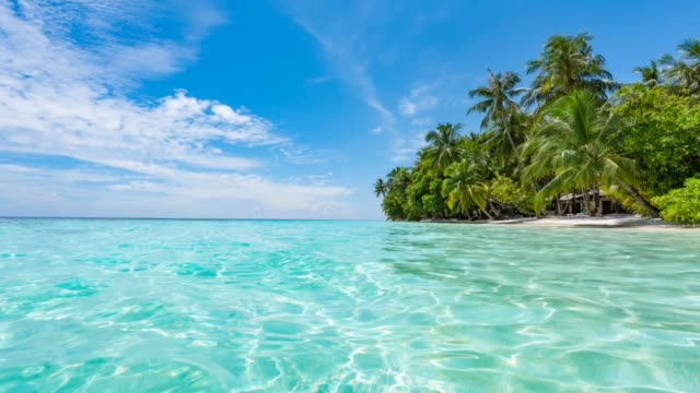 paradisiac beach at maldives - palm tree stock videos & royalty-free footage