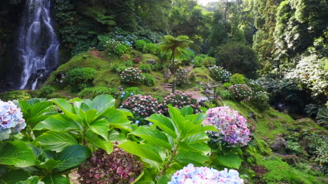 paradisiacal azores island view with waterfall, rainforest and flowers in bloom. - atlantic islands stock videos & royalty-free footage