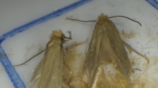 parasitic wasps to tackle troublesome moths at norfolk stately home; uk, england, norfolk, aylsham, blicking estate; various shots blicking estate,... - majestic stock videos & royalty-free footage